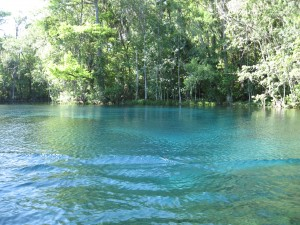 Springs on the Silver River