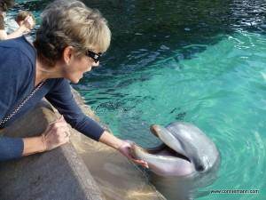 Feeding Dolphin at Sea World_www.conniemann.com