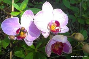 orchid reborn