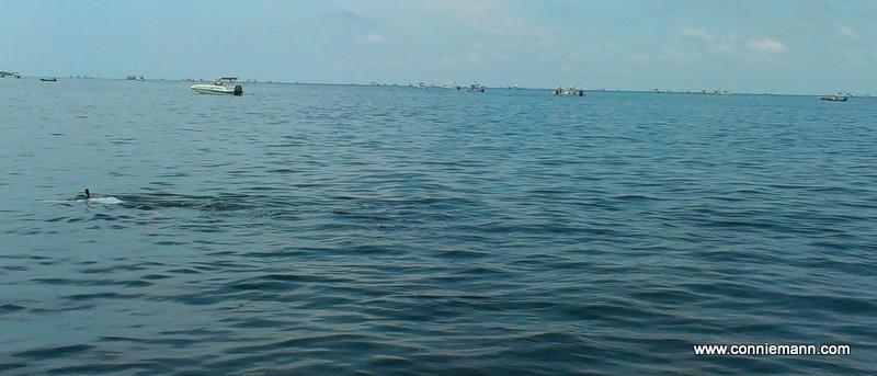 scallop boat flotilla